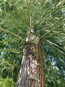 Telepathische Kommunikation mit Bäumen