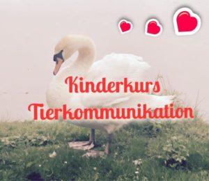 Kinderkurs Tierkommunikation @ Praxis Seelenmission